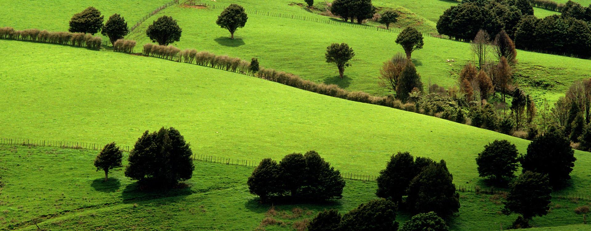 BioTrek Adventure Travel Tours - New Zealand green fields
