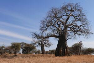 Tanzanian Savanna